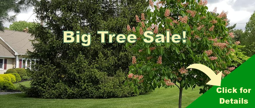 Aug-Website-Home-BigTree-Sale